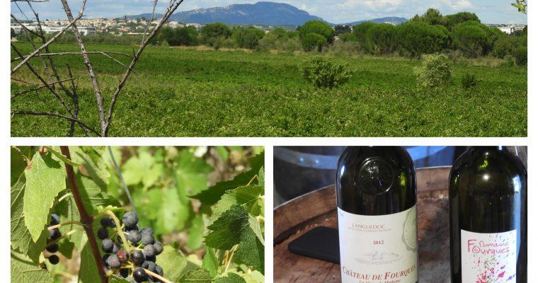 Le Château de Fourques : du vin au féminin